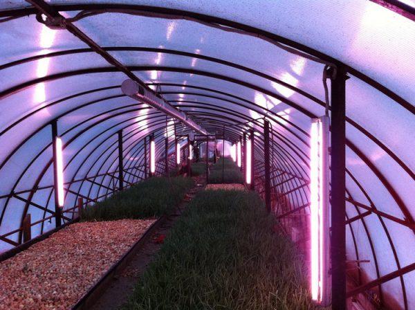 Люминесцентные лампы для теплицы