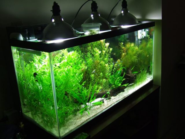 Лампы для аквариума обеспечат качество освещения и экономию