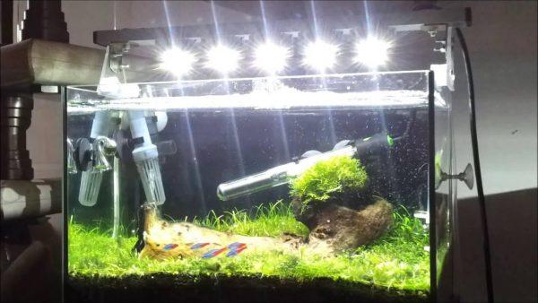 Освещение аквариума галогенными лампами