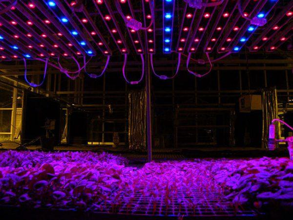 Для выращивания растений в закрытом грунте необходимо обеспечить подсветку определенного спектра