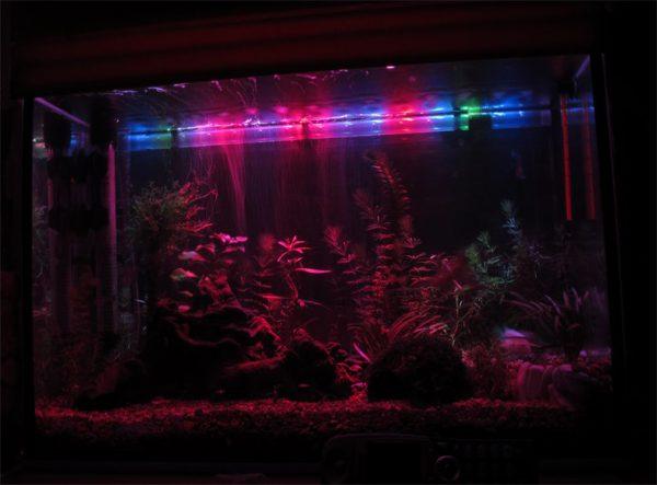 Для освещения аквариума лучше всего подходит красное и синее свечение