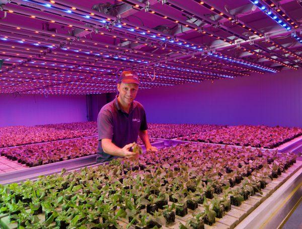 Освещение растений в теплице светодиодными лампами