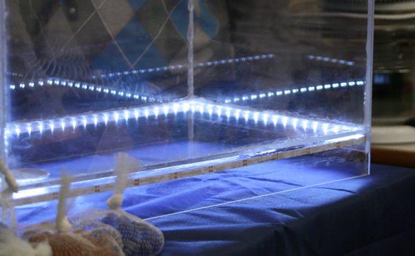 Подсветка аквариума с помощью влагозащищеной LED-ленты