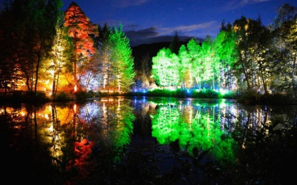 Декоративное освещение деревьев