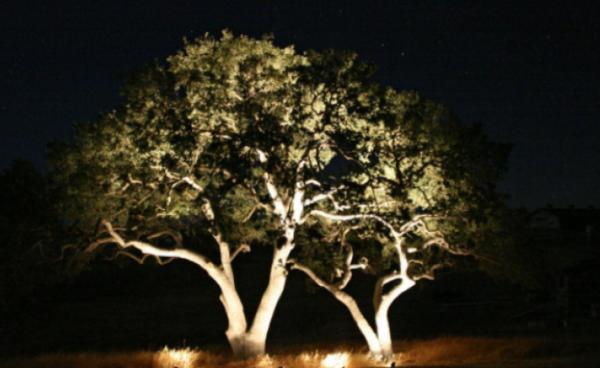 Освещение деревьев снизу