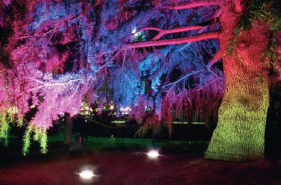 Подсветка дерева в парке